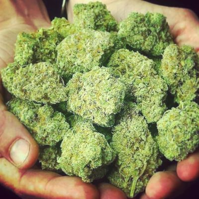 BUY BLUE CHEESE KUSH ONLINE AUSTRALIA
